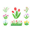 spring garden flowers with blooming grass vector image vector image