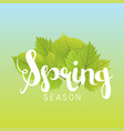 spring season letter and green leaves vector image
