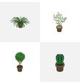 isometric houseplant set of tree peyote plant vector image