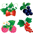 Set of berry vector image