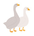 adorable goose and duck isolated on white vector image vector image