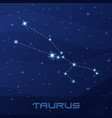 constellation taurus astrological sign vector image vector image
