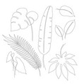 continuous line drawings of tropical leaves vector image vector image