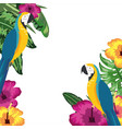 macaw parrot with flowers and leaves background vector image vector image