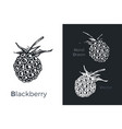 hand drawn blackberry icons vector image