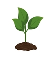 plant with pot isolated icon vector image
