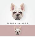 french bulldog head geometric polygonal logo icon vector image