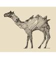 Camel Engraved Hand Drawn Sketch vector image