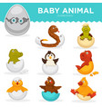 baby animals hatch eggs cartoon pets hatching vector image vector image