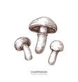 champignon set hand drawn food drawings vector image