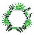 exotic and tropical leafs plants diamond frame vector image vector image