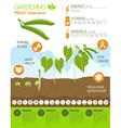 Gardening work farming infographic Peas Graphic vector image