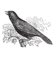Giant Cowbird vintage engraving vector image vector image