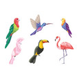 set tropical birds exotic nature vector image vector image