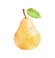 watercolor pear fruit with leaf on white vector image vector image