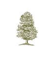 woodcut junniper tree vector image vector image