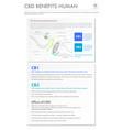cbd benefits human vertical business infographic vector image vector image