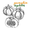 pumpkin vegetable set hand drawn vector image vector image