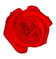 Red rose EPS 10 vector image