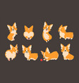 corgi characters domestic pet cartoon animal vector image vector image