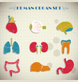 human internal organs set vector image vector image