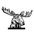 peeking moose head original black white hand vector image vector image