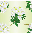 seamless texture branch white flowers vector image vector image