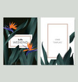 greeting card template design tropical plant vector image vector image