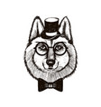 hipster wolf muzzle wearing top hat and bowtie vector image vector image