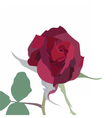 Watercolor Red Rose isolated vector image vector image