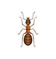 ant insect pest control parasites extermination vector image vector image