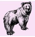 big bear vector image