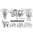 collection of engraved african elephants animals vector image