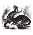 mink vintage vector image vector image
