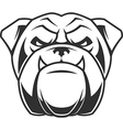 the head a fierce bulldog vector image vector image