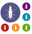 beetle insect icons set vector image vector image