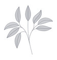 branches with leaves isolated icon vector image vector image