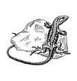 lizard on stone engraving vector image vector image