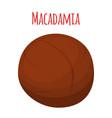 organic macadamia nut oil ingredientflat vector image vector image