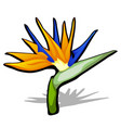 beautiful bird of paradise flower strelitzia vector image vector image