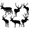 deer collection 2 vector image vector image