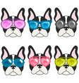 french bulldogs with sunglasses vector image