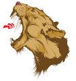roaring lion head isolated on white vector image