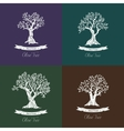 Greek oil olive trees set for olive grove vector image vector image