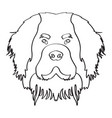 isolated saint bernard avatar vector image vector image