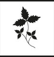 branch with leaves black silhouette closeup vector image