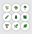 flat icon bio set of linden park evergreen and vector image