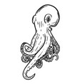 hand drawn octopus seafood design element for vector image