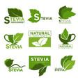 stevia sweetener sugar natural substitute vector image vector image