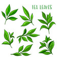 tea leaves icon green tea leaf for package vector image